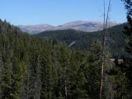 Coniferous forest in the Greater Yellowstone Ecosystem near Bacon Rind Creek
