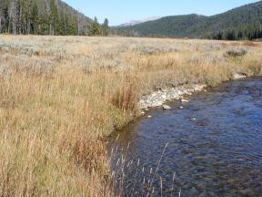 Open meadow along Bacon Rind Creek