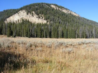 Along Bacon Rind Creek the coniferous forests surrounding the open meadows