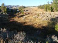 Wildlife habitat along Bacon Rind Creek in Yellowstone National Park
