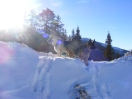 Draco and Leah atop a snowbank on Monarch Pass