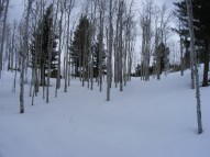 Aspen grove on Old Monarch Pass near its western base