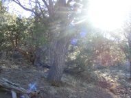 Sunshine penetrates the forest on the Hermit's Rest Trail