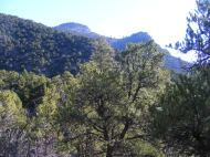 The forested slopes and canyon rim near Hermit's Rest