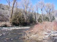 The Cimarron River and bare cottonwoods