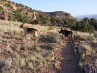Draco and Leah on the McCarty Trail, on McCarty Bench above Escalante Canyon