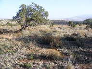 Pinon on Camp Ridge, the wind gusting all around but not blowing the haze away