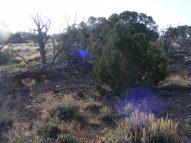 The pinon-juniper forest on Camp Ridge