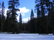 Gold Creek snowpack in the forest's shade