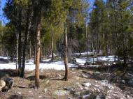 Snow melting out on a southern aspect on Gold Creek