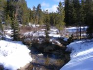 Gold Creek flowing through the lodgepole pine forest