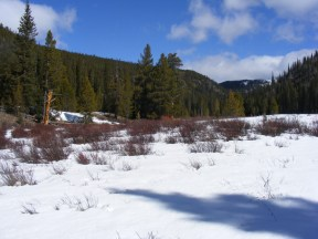 The meadow near New Dollar Gulch, looking up towards the head of Gold Creek