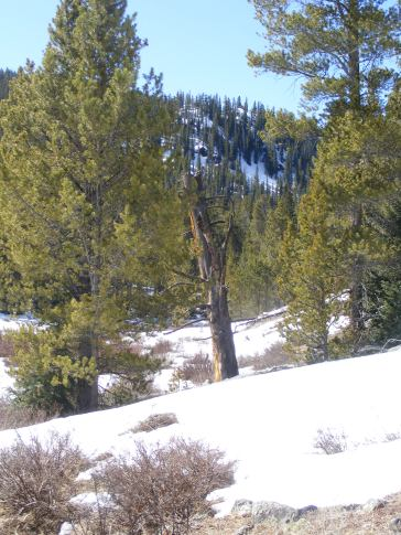Patchy snowpack on Gold Creek