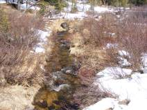 Waters of Gold Creek gurgle through the willow