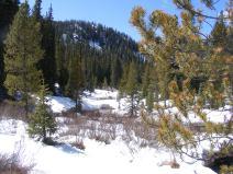 Melting snowpack on Gold Creek
