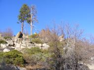 Trees and granite, eastern Sierra Mountains near Milford and Laufman Campground