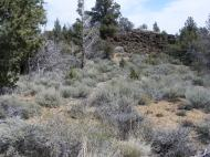 The typical vegetation along the Big Nasty Trail in Lava Beds National Monument