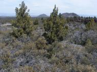 Hippo and Schonchin Buttes seen from the Big Nasty Trail