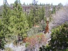 Collapsed lava tube formed Hidden Valley in Lava Beds National Monument