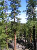 Ponderosa park in the bottom of Hidden Valley, Lava Beds National Monument