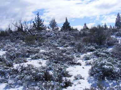Typical vegetation along the Three Sisters Trail in Lava Beds National Monument