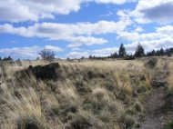 Yellow grass and blue sky, Missing Link Trail, Lava Beds National Monument