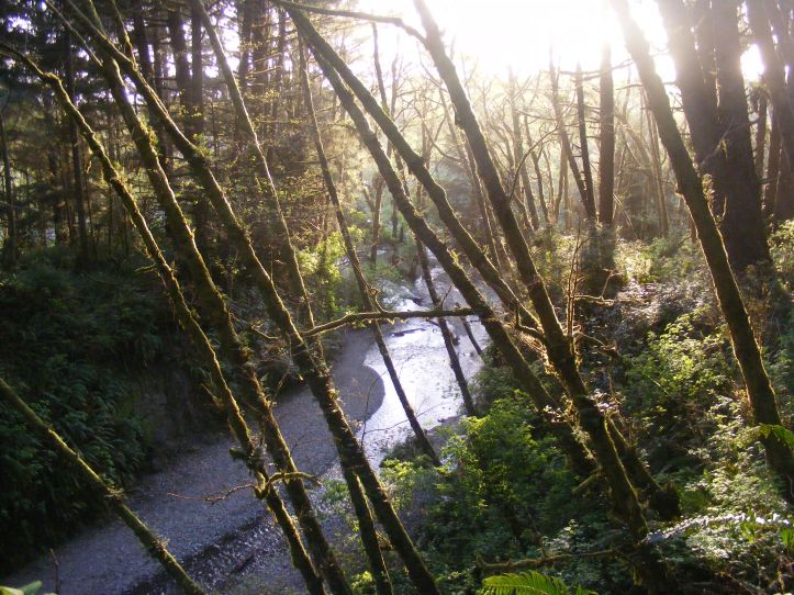 Fern Canyon with Home Creek flowing through the sunset lit forest on the California coast in Redwood National Park