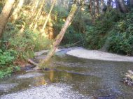Home Creek flows out of Fern Canyon, Redwood National Park