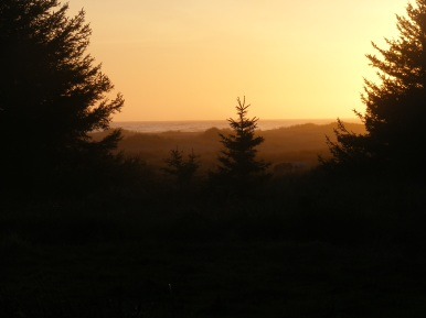 Golden light at Gold Bluffs Beach, sunset in Redwood National Park
