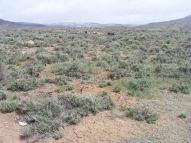 Sere landscape that is the sagebrush sea near Cabin Creek
