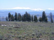 The San Juan Mountains, from Dillon Mesa