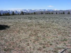 On Dillon Mesa, looking at the West Elk Mountains with fresh snow
