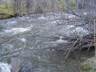 West Elk Creek just before its enters Blue Mesa Reservoir