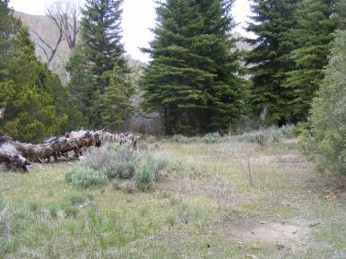 Typical vegetation near West Elk Creek