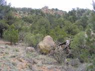 Cholla cactus, pinyon, juniper and granite near Reese Gulch