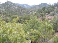 Reese Gulch pinyon and juniper