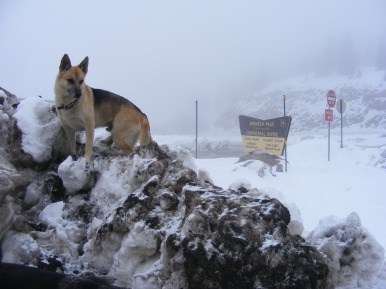 It is May 21, 2015 and it might as well be January 21 as Draco climbs a snow bank on Monarch Pass