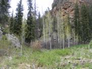 The new green of fresh, Spring aspen leaves