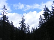 Conifers silhouetted in Taylor Canyon