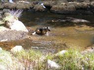 Leah in Middle Quartz Creek