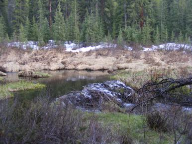 Beaver pond on South Quartz Creek in late May