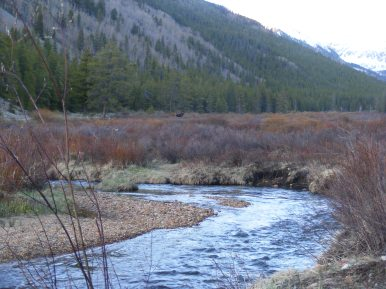 Middle Quartz Creek is habitat for willow and their moose