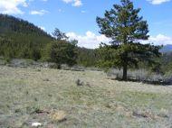 Grassy meadow on the Rainbow Trail near Salida