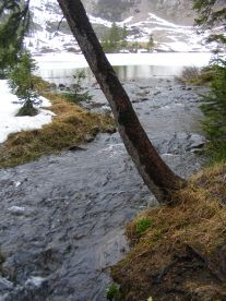 Mill Creek at the outlet to Mill Lake, Gunnison National Forest