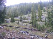 Sub-alpine forest near Mill Lake