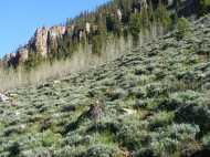 Deadman Gulch, Gunnison National Forest, Colorado, vibrant late Spring vegetation below spires of rock