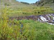 Beaver Dam near confluence of Deadman and Rosebud Gulches