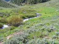 Deadman Gulch just below Bear Creek in mid-June
