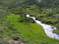 Verdant Bear Creek