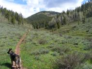 Leah and Draco on the Bear Creek Trail